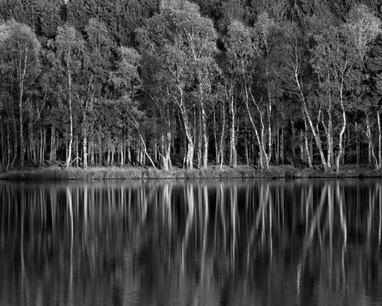 Tatton Reflections v.3 (m)