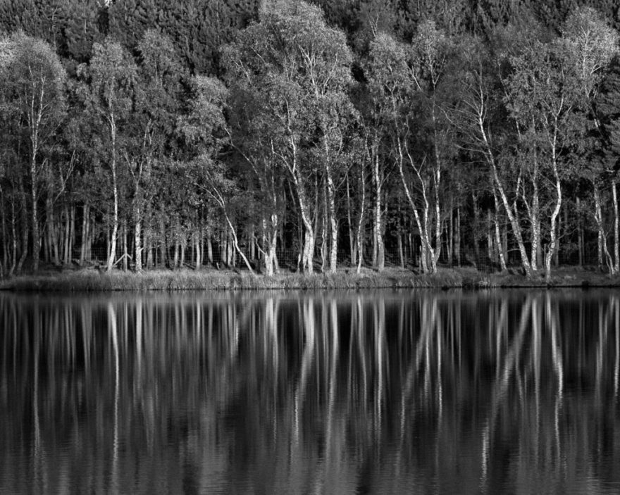 Tatton Reflections v.3 (m)
