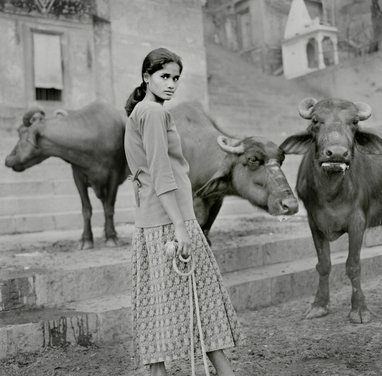 Buffalo Lady Varanasi. Image copyright Jason Scott Tilley.
