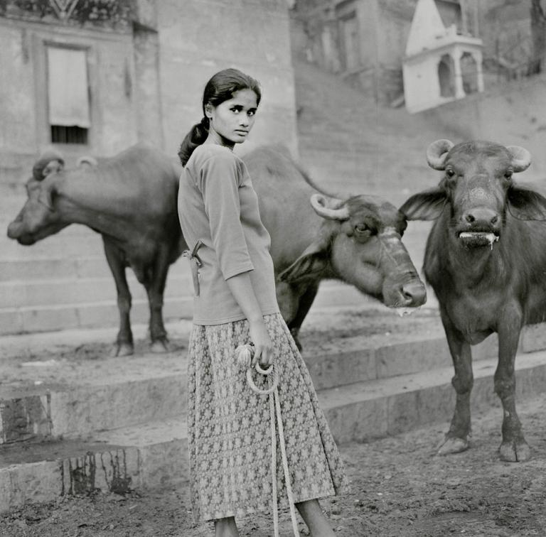 Buffalo Lady Varanasi. Image copyright Jason Scott Tilley.
