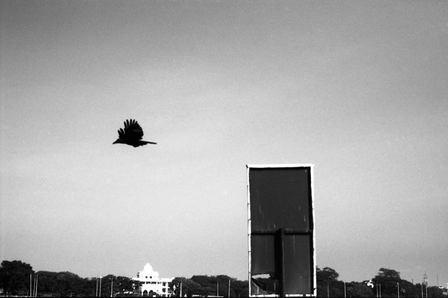 Marina - Crow Flying