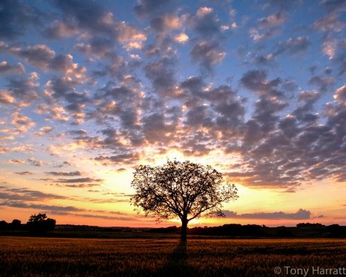 The Sunset Tree #3