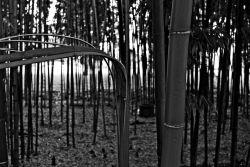 Un'idea di foresta, Milano, November 8, 2018_05 72
