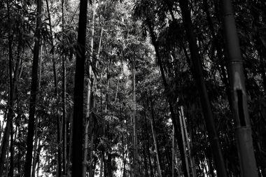 Un'idea di foresta, Milano, November 8, 2018_06 72