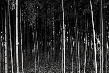 Un'idea di foresta, Milano, November 8, 2018_16 72