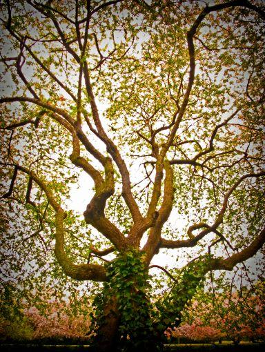 Tree890