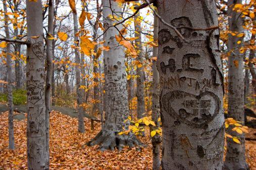 Trees3888