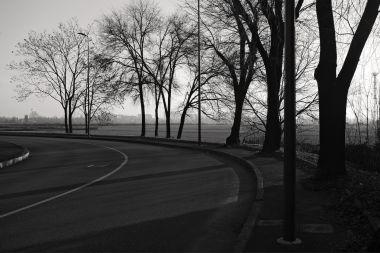 UrbanTrees_02