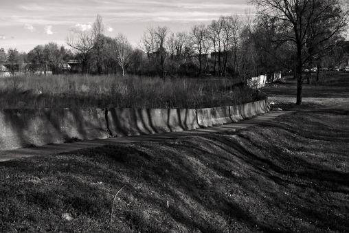 UrbanTrees_05